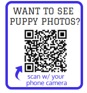 puppy-scan.png